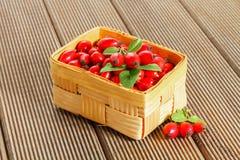 Świeża rosehip owoc, liście i Fotografia Royalty Free