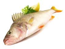 Świeża ryba - żerdź zdjęcie royalty free