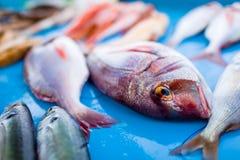 Świeża ryba Zdjęcie Stock