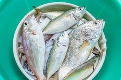Świeża ryba Zdjęcia Stock