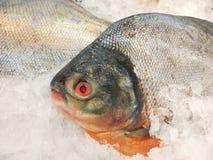 Świeża ryba na lodowej sprzedaży w owoce morza rynku Zdjęcia Stock