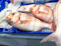 Świeża ryba na lodzie w rynku Isla Crsitina, Huelva, Hiszpania zdjęcia royalty free