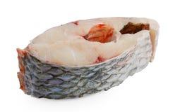 Świeża ryba nad białym tłem obrazy royalty free