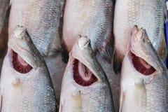 Świeża ryba, owoce morza Zdjęcia Stock