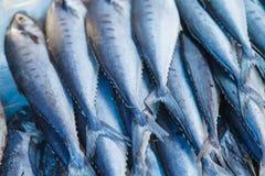 Świeża ryba, owoce morza Fotografia Royalty Free