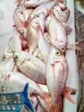 Świeża ryba Pospolity Pandora w rynku Isla Crsitina, Huelva, Hiszpania fotografia royalty free
