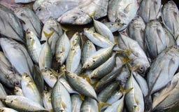 Świeża ryba przy rynkiem Obrazy Stock