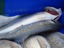 Świeża ryba w błękitnym pudełku przygotowywającym sprzedawać Zdjęcia Stock