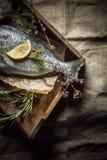 Świeża ryba z rozmarynami i koperem na tacy Fotografia Stock