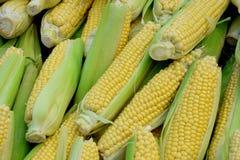 Świeża słodka kukurudza od miasto rynku Obrazy Stock