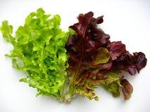 Świeża sałata od ogródu Zdjęcie Stock