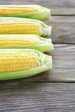 Świeża soczysta kukurydza Obrazy Stock