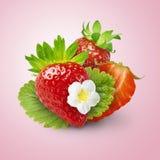 Świeża soczysta truskawka z zieleń liśćmi odizolowywającymi zdjęcia royalty free