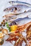 Świeża Surowa ryba, Shellfish i owoce morza na lodzie, zdjęcia royalty free