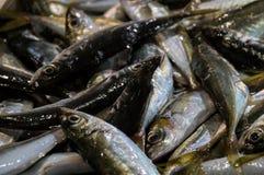Świeża surowa ryba w rybim rynku Obrazy Stock
