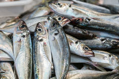 Świeża surowa ryba w rynku obrazy royalty free