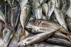 Świeża surowa ryba w rynku obraz royalty free