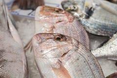 Świeża surowa ryba w rynku fotografia stock
