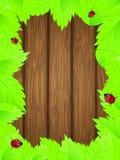 świeża tło zieleń opuszczać drewniany Obrazy Royalty Free