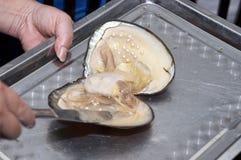 świeża target788_0_ mussel pereł woda Obraz Stock