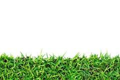 świeża trawa obraz stock