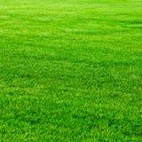 świeża trawa Zdjęcia Royalty Free