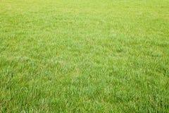 świeża trawy zieleni wiosna Zdjęcia Royalty Free