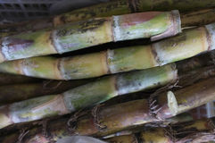 Świeża trzcina cukrowa, pojęcie surowy materiał dla cukieru obrazy royalty free