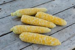 Świeża ukradziona Bi koloru kukurudza Zdjęcia Royalty Free