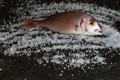 Świeża włoch ryba na ciemnym tle fotografia stock