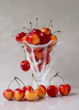 Świeża wiśnia w szkle Obraz Stock