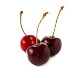 Świeża wiśnia, wiśnie odizolowywać na białym tle Zdjęcie Royalty Free