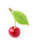 Świeża wiśnia z liściem odizolowywającym Obraz Royalty Free