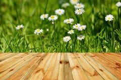 Świeża wiosna kwitnie łąkę Świezi wiosna kwiaty, trawa i słońce, Obraz Stock