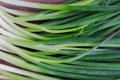 Świeża wiosny cebula na nieociosanym drewno stole Zamyka w górę scallions lub s zdjęcie royalty free