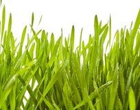 Świeża wiosny trawa z iskrzastymi raindrops Zdjęcia Royalty Free