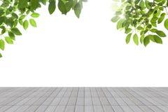 Świeża wiosny zieleń opuszcza z betonową podłoga odizolowywa Zdjęcia Stock