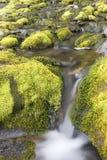 świeża woda Zdjęcie Stock