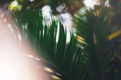 Świeża zdrowa życiorys tło plama naturalna z abstrakt zamazującym ulistnieniem i jaskrawy lato migoczemy światła słonecznego tło  fotografia stock