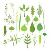 Świeża zieleń opuszcza od drzew, krzaków i trawy ustawiających dla etykietka projekta, Natura i ekologia, kreskówka wyszczególnia royalty ilustracja
