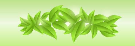 Świeża zieleń opuszcza tło z światłami słonecznymi Zdjęcie Royalty Free