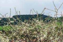 świeża zieleń opuszcza z plamy tłem w wiosny słońcu obrazy stock
