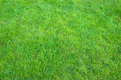 Świeża zieleń robiący manikiur gazonu zakończenie up Obcięty zielonej trawy tło obrazy stock