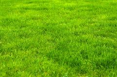 Świeża zieleń robiący manikiur gazonu zakończenie up Obcięty zielonej trawy tło fotografia stock