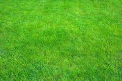 Świeża zieleń robiący manikiur gazonu zakończenie up Obcięty zielonej trawy tło zdjęcia royalty free