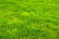 Świeża zieleń robiący manikiur gazonu zakończenie up Obcięty zielonej trawy tło obrazy royalty free