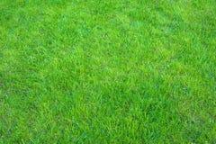Świeża zieleń robiący manikiur gazonu zakończenie up Obcięty zielonej trawy tło zdjęcie royalty free