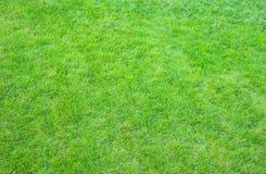 Świeża zieleń robiący manikiur gazonu zakończenie up Obcięty zielonej trawy tło fotografia royalty free