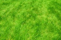 Świeża zieleń robiący manikiur gazonu zakończenie up Obcięty zielonej trawy tło Zielony gazonu tło obrazy stock