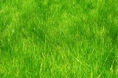 Świeża zieleń robiący manikiur gazonu zakończenie up Obcięty zielonej trawy tło Zielony gazonu tło zdjęcie stock